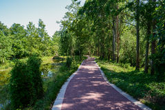 Shady asphalted path in sunny summer Stock Images