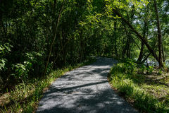 Shady asphalted way in woods of sunny summer afternoon Stock Image
