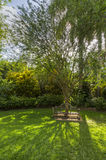 A shady Bench in Queen Elzabeth Gardens royalty free stock photo