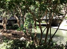 Lush Trees Along The Riverwalk. A shady bench under the lush green trees that line the Riverwalk in San Antonio, Texas, beckons you to sit a while royalty free stock photo