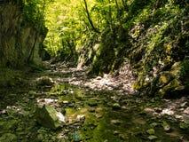 Shady canyon in Crimea Stock Image