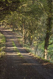 Shady country lane Stock Images