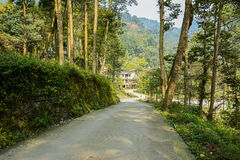 Shady countryroad to village in sunny winter Stock Image