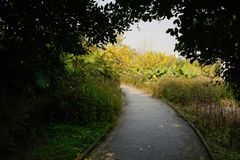Shady curving path in plants and trees of sunny winter afternoon. Chengdu,China royalty free stock photography