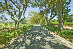 Shady drive down Constantia Wine Vineyard outside of Cape Town, South Africa Stock Photography
