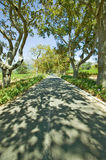 Shady drive down Constantia Wine Vineyard outside of Cape Town, South Africa Stock Images
