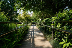 Shady fenced path in sunny summer afternoon Royalty Free Stock Images