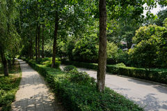 Shady footpath along countryroad in sunny summer Royalty Free Stock Photography