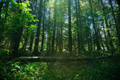 Shady forest Stock Photography
