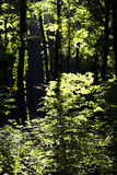 Shady forest Royalty Free Stock Images