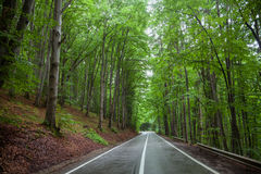 Shady forest road Stock Photography