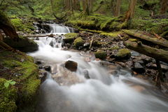 Shady Forest Stream Royalty Free Stock Images