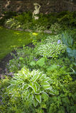 Shady garden with perennials. Lush green summer garden with perennial plants and flowers Stock Photo