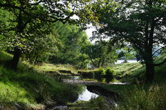 Stream and trees. Shady glen leading to Calf Hey reservoir Royalty Free Stock Images