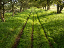 Shady Green Lane Track with Trees Stock Photo