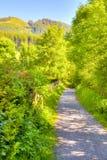 Shady hiking path in the Allgäu Stock Photo