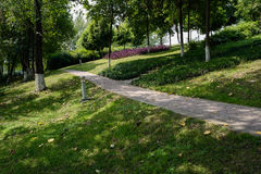 Shady hillside footpath in woods on sunny summer day Stock Photo