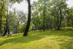 Shady hillside lawn on sunny day Stock Images
