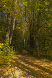 Shady lime avenue. In the sunny autumn afternoon Royalty Free Stock Photos