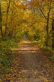 Shady lime avenue. In the sunny autumn afternoon Royalty Free Stock Photo