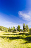 Shady mountain meadow under blue sky Stock Photo