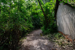 Shady muddy path outside dilapidated farmhouse in sunny summer Royalty Free Stock Image