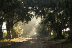 Shady Oak Lane Stock Images