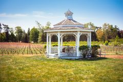 Shady outdoor gazebo by rows of grapes royalty free stock photography