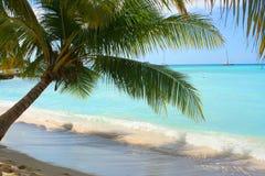 Shady palm Royalty Free Stock Photography