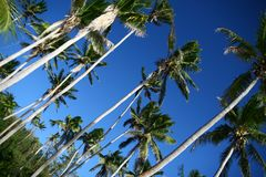 Shady palms in Fiji Royalty Free Stock Photo