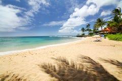 Shady palms of Kauai Stock Image