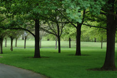 Shady Park. Park of multiple leafy trees staggered on green well-kept lawn Stock Photography
