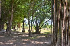 Shady path with bamboo Thailand 1. Royalty Free Stock Images