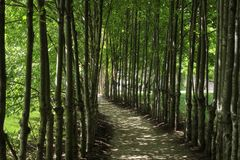 Shady Path. A curvy path in the shades of crones of young trees Royalty Free Stock Photo