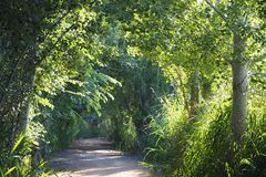 Refreshing trail for the hot days, lerida royalty free stock images