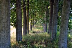 Shady path through the trees Royalty Free Stock Photography