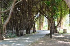 Shady path with trees Thailand 2. Royalty Free Stock Image