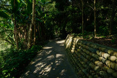 Shady pavement in woods of sunny summer afternoon Royalty Free Stock Images