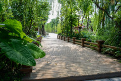 Shady planked bridge in verdant plants on sunny day Stock Photos