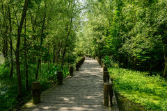 Shady planked footbridge in woody swamp on sunny summer day Royalty Free Stock Photography