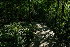 Shady planked footway in flourishing woods of sunny summer after Royalty Free Stock Photography