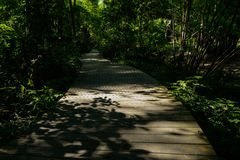 Shady planked path in woods of sunny summer afternoon Royalty Free Stock Photo