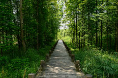 Shady planked path in woods of sunny summer Royalty Free Stock Photo
