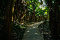 Shady planked way in Chinese banana trees on sunny summer da. Y,Chengdu,China royalty free stock photography