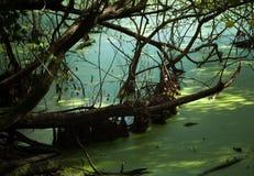 Shady pond Stock Photos