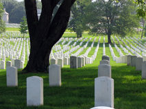 Shady Rest. A large tree amongst the headstones in Arlington Cemetery, Washington, D.C Stock Photography