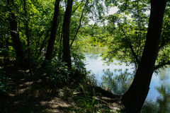 Shady riverbank in sunny summer afternoon Royalty Free Stock Image