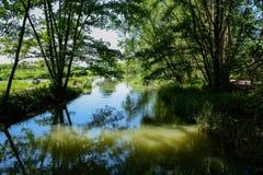 Shady riverlet in sunny summer Royalty Free Stock Photos
