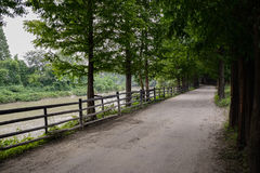 Shady road along river in sunny summer Royalty Free Stock Image