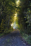 Shady road in autumn forest Stock Photo